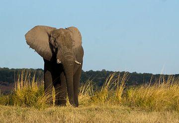 Portret van een olifant, Botswana van Christel Nouwens- Lambers