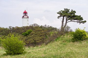 Der Leuchtturm Dornbusch auf der Insel Hiddensee von Rico Ködder