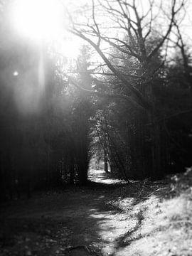 Sonnenstrahl ins Wald von sterre Jansen