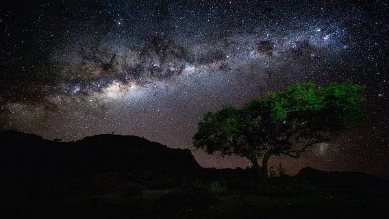 Sterrenhemel met Melkweg boven boom - Aus, Namibië