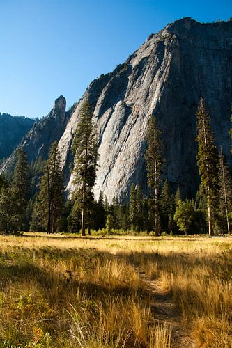 Meadow in Yosemite Valley von Klaas Lauwers