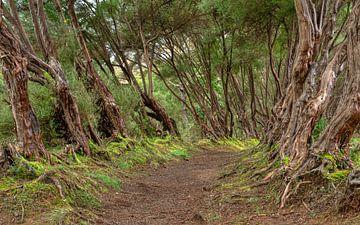 Het pad.... van Peter Korevaar