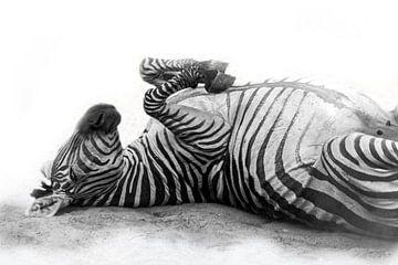 Rollende Zebra, zwart-wit (Dierenpark Emmen) von Aafke's fotografie