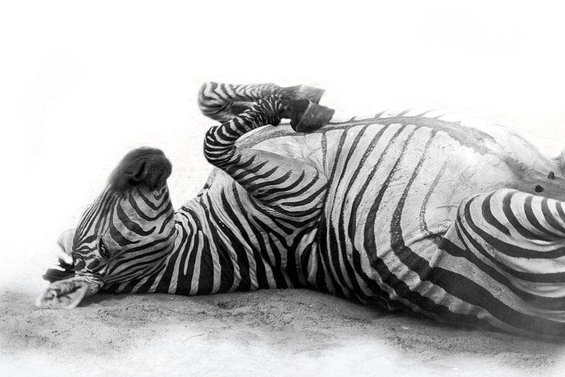 Rollende Zebra, zwart-wit (Dierenpark Emmen) van Aafke's fotografie