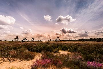 Wolken über der blühenden Heidelandschaft von Bert-Jan de Wagenaar