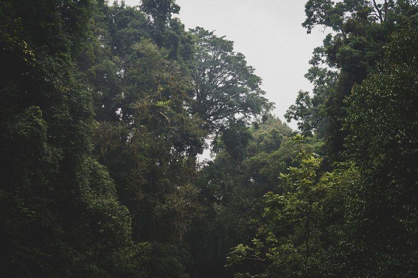 Regenwald von Ennio Brehm