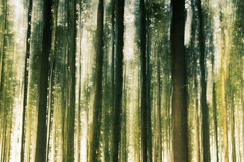 Bewegende boomstammen in het bos
