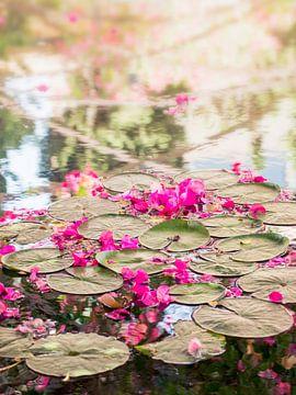 Blumen und Seerosen in einem Teich auf Mallorca von Evelien Oerlemans