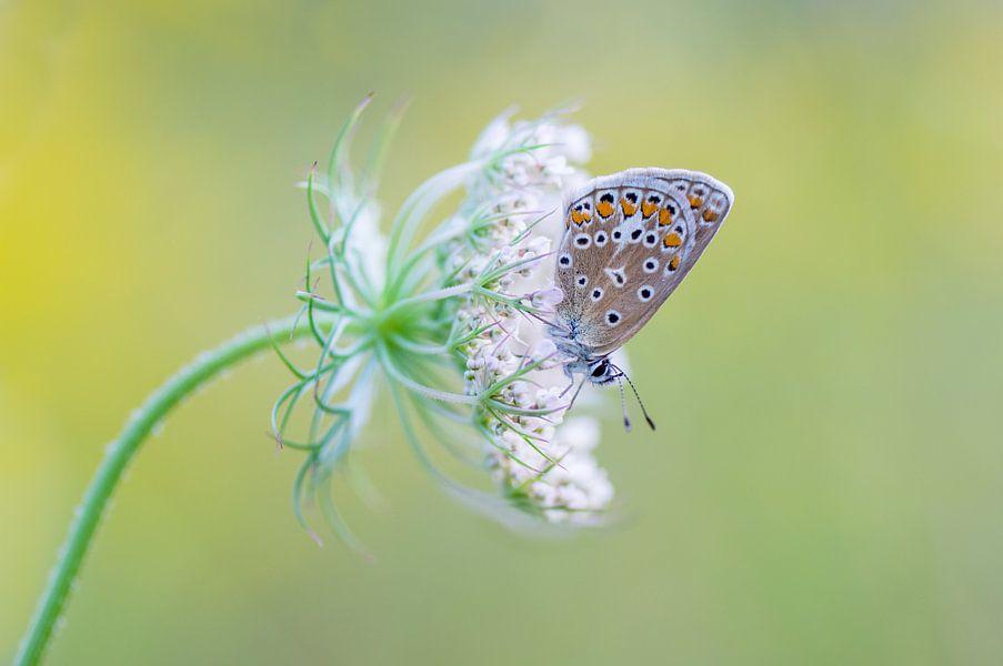 Icarus op een bloem