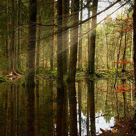 Water & zonnestralen in het bos van Sran Vld Fotografie