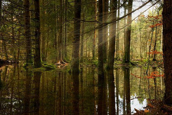 Water & zonnestralen in het bos