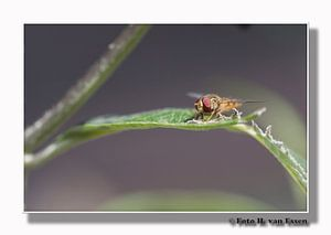 Fly on a leave