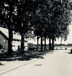 Black & white bomen van Eline