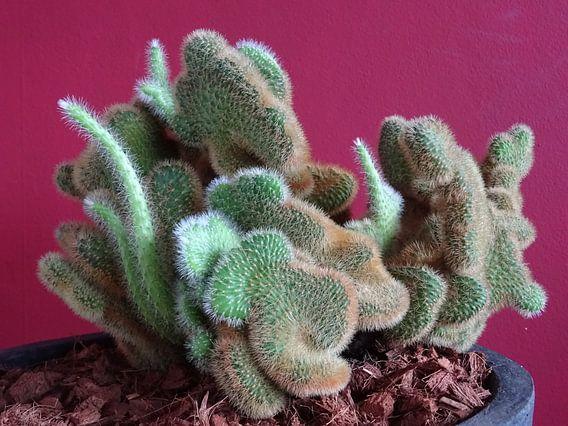 Kamerplant: SciFi Cactus 1-10