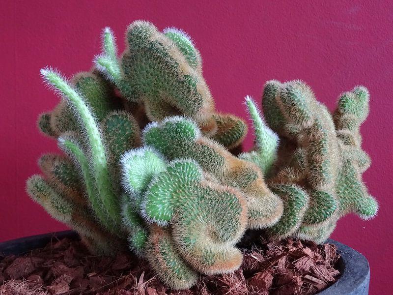 Kamerplant: SciFi Cactus 1-10 van MoArt (Maurice Heuts)