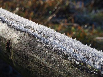Hout bedekt met ijskristallen van Anne de Brouwer