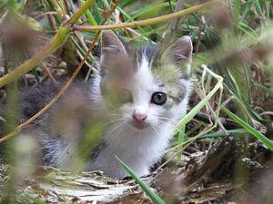 ... nieuwsgierige kitten in het gras ....