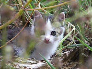 ... nieuwsgierige kitten in het gras .... van Pascal Engelbarts