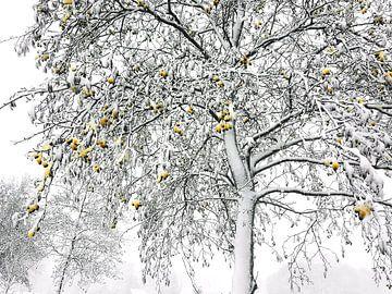 Winterliche 'sphären' von Erna Kampman