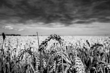 Oreilles de blé sur Dave Bijl