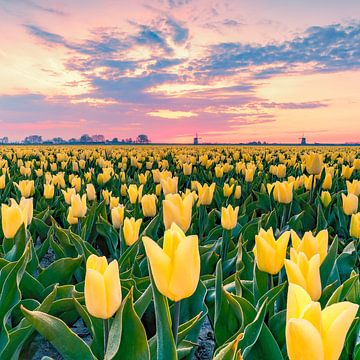 Gelbe Tulpen von Nick de Jonge - Skeyes