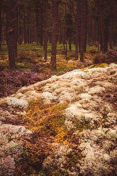 Mos en bos van Pascal Deckarm