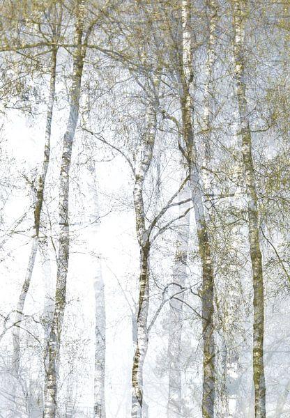 Berkenbomen van Marian Steenbergen