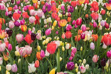 Blumengarten von Marianne Twijnstra-Gerrits