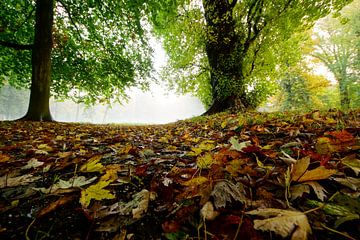 forever autumn sur Dirk van Egmond