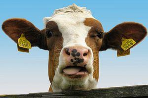Koe nummer3416 van Evert Middelbeek