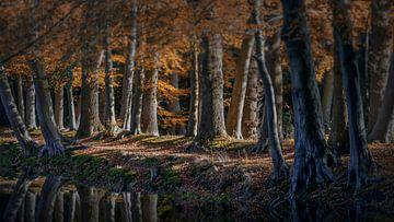 Herfstbos in bruine kleuren van Peter Bolman