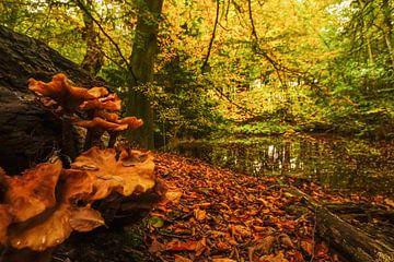 natuur aan meer von Dirk van Egmond