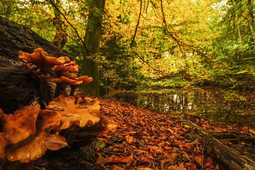 natuur aan meer van Dirk van Egmond