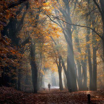Wandelaar met hond in herfstbos von Jenco van Zalk
