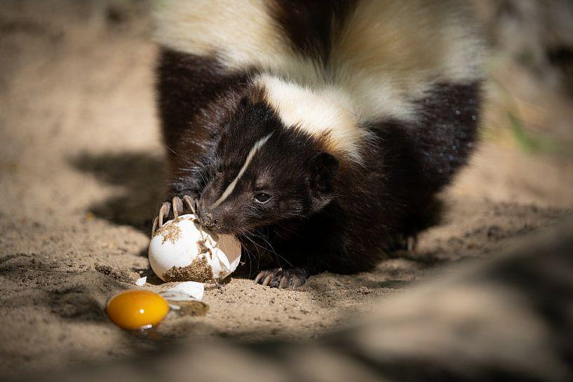 Frühstück von Tierfotografie.Harz