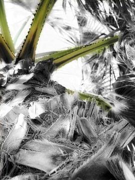 Palme schwarz-weiß und grün von Esther van Dijk