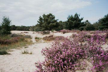 Heide van Marianne Bal