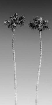 Palmen in monochroom van Melanie Viola