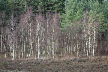 Birch Forrest van Erwin Delsman