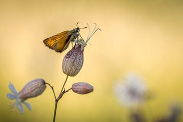 Ein kleiner Schmetterling von Gonnie van de Schans