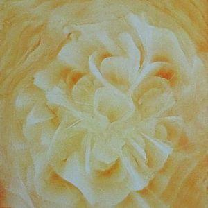 Licht oranje bloem