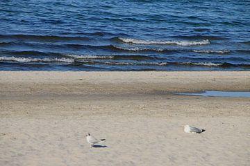Möwen im Sand van Rosi Lorz