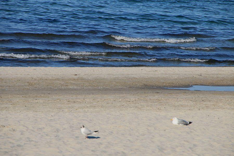 Möwen im Sand