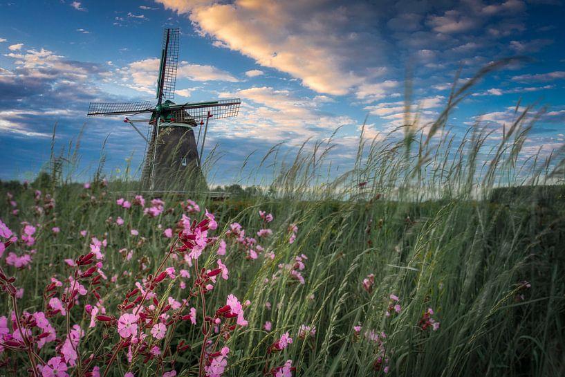 Windesheimer molen van René Vierhuis