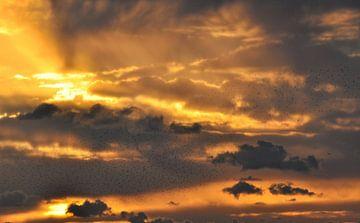 sun birds von M K
