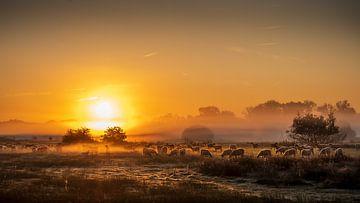 Des moutons dans la brume sur Rob Sprenger