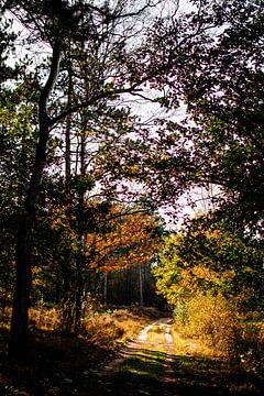 Bospad in de herfst || Nederlandse landschappen