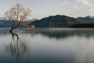 Wanaka Tree in Nieuw-Zeeland van Sophia Eerden