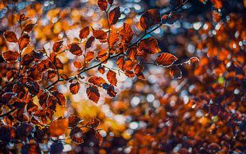 Herfstkleuren.02 (16x10) van Timo Bergenhenegouwen