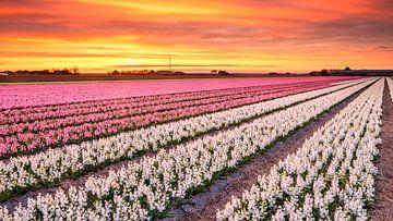 Blumenfelder in voller Blüte von eric van der eijk